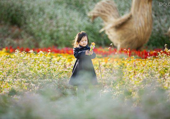 Báo Phụ Nữ Life: Bộ ảnh em bé Đà Lạt hóa thiên thần trên thảo nguyên hoa tam giác mạch